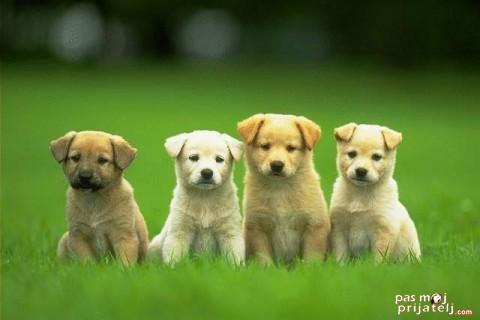 Izbor šteneta