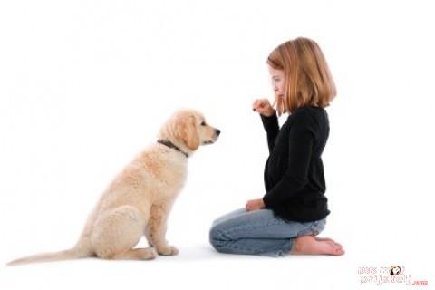 Ponašanje pasa